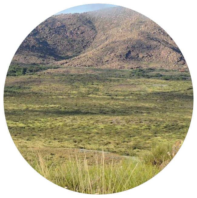 Monte de Llanuras y Mesetas